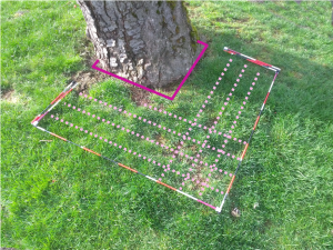 veg frame showing visualized lines