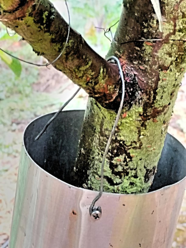 wire hooked over tree limb